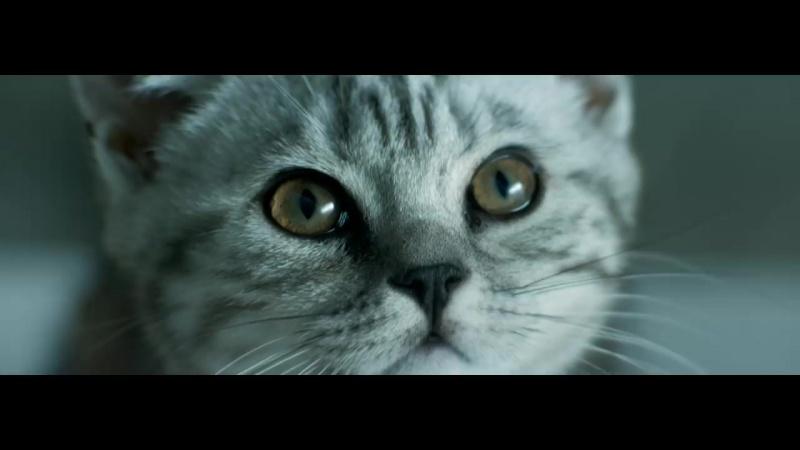 Curious_Cats_-_Rain_-_Whiskas_TV_ad