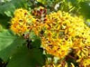 Желтые цветы, экзотические растения, декоративные кустарники, природа Испании,