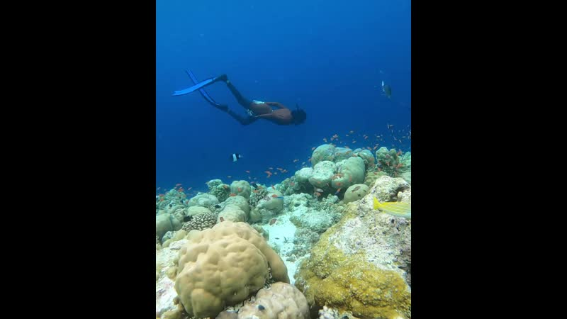 Free diving near live corals