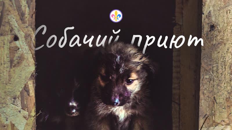 Доброе дело в собачьем приюте Кармасан Скауты свободы