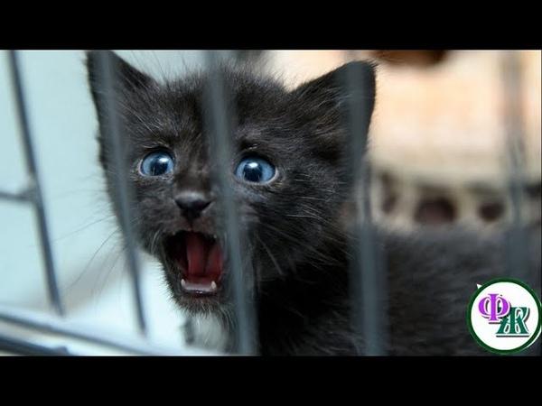 Рожденный в клетке плюшевый КОТЕНОК не знал что есть другая жизнь…