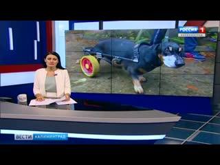 Собака-инвалид из Зеленоградска нашла новый дом
