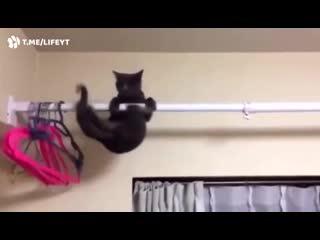 Кот знакомится с гравитацией