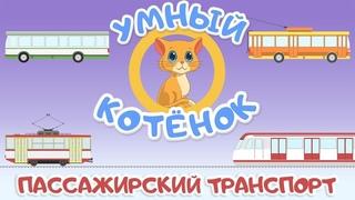 Пассажирский транспорт и Умный котенок.Обучающий мультик для малышей. Развивающий про машинки