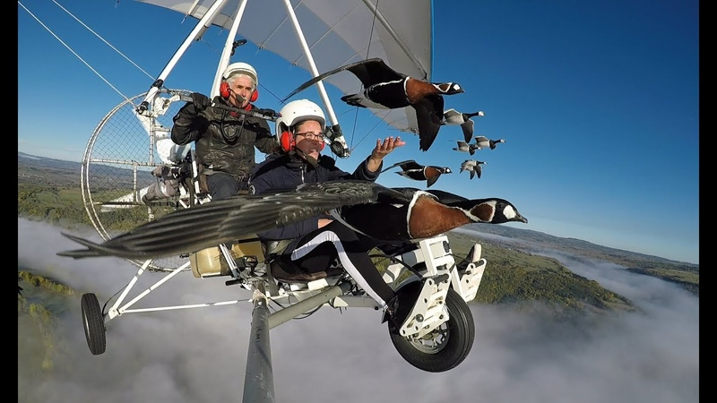 Vol en ULM avec les oies. Fly with birds, geese, and Christian Moullec on board a microlight.
