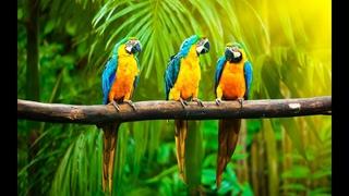 Дикая природа Австралии  Большие попугаи  Документальный фильм