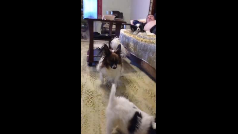 Ливи играет со щенком