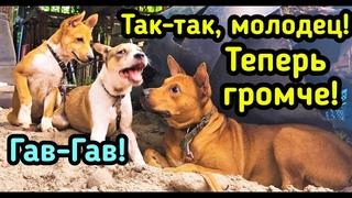 """Чудом ВЫЖИВШАЯ СОБАКА """"ДОНАР"""", стал МАМОЙ 😊 для больных щеночков в приюте для бездомных животных!"""