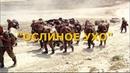Война. Вторая чеченская. Бои за высоту Ослиное ухо.