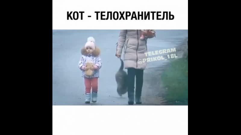 Кот телохранитель