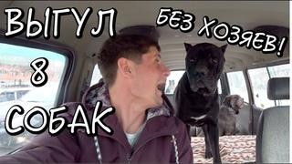 Выгул ВОСЬМИ собак без хозяев 😱 Площадка для выгула в Новороссийске 🐶 Один обычный рабочий день 🚗