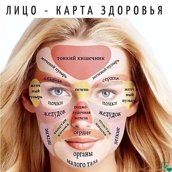 Каждая часть лица напрямую связана с определенным внутренним органом. Кожа это наш самый большое орган, на котором проявляются многие проблемы человека со здоровьем.Китайцы говорят, что лицо