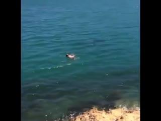 Кто хочет поплавать с косатками?
