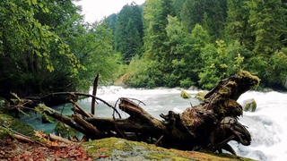Beautiful forest river. Relaxing Nature sounds (10 hours) White Noise for sleep