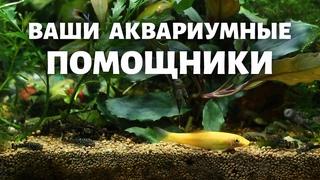 Самые полезные обитатели вашего аквариума