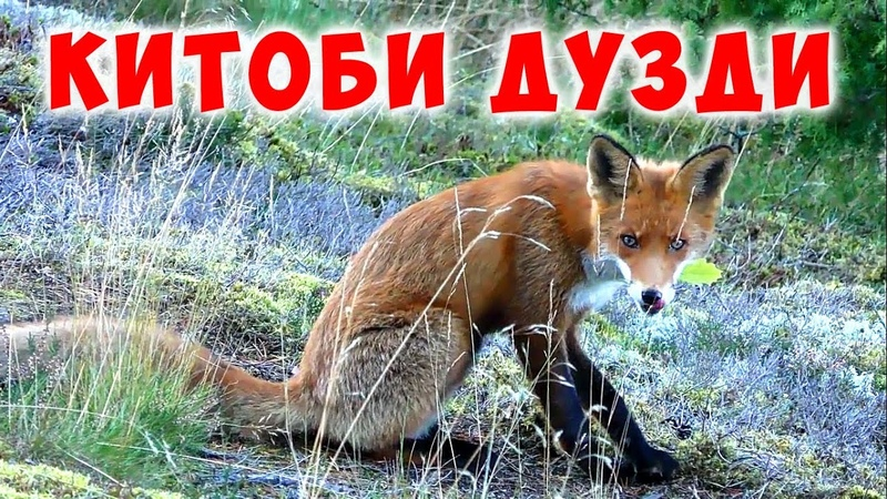 Ман Китоби Куръонро Дуздидам Чикор Кунам КИТОБ ДУЗДИДАН ЧОИЗ