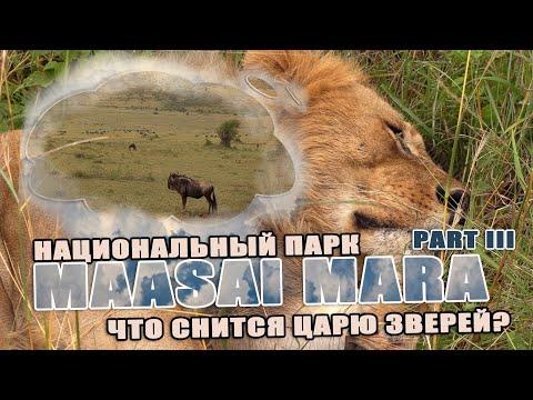 Masai Mara что снится льву?