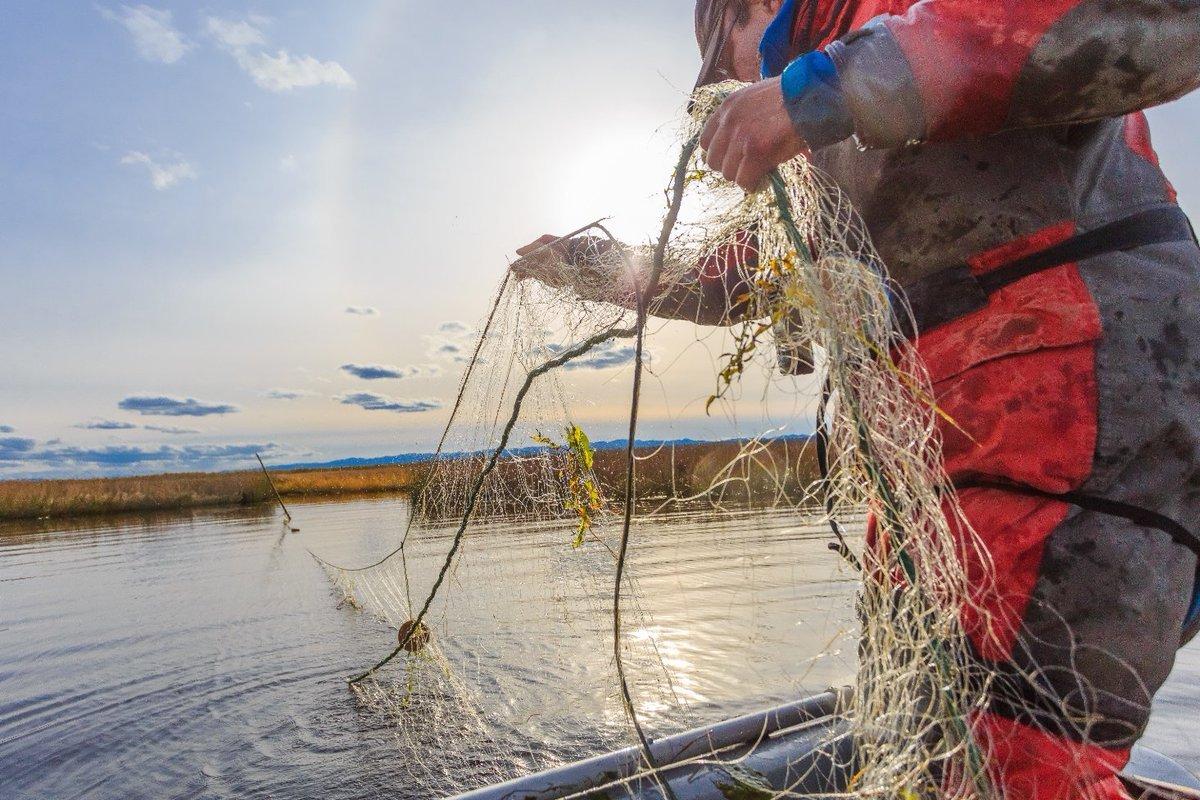 Депутат карельского парламента Ирина Кузичева предложила разрешить ловить рыбу сетью в Лоухском, Кемском и Беломорском муниципальных районах.