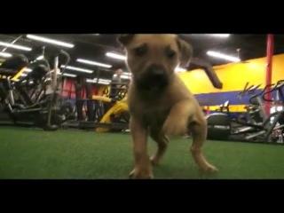 Mma fighter brett rogers knocks out dog fighting
