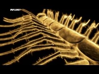 Войны жуков гигантов 4 серия Discovery 2011