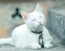 Фотоальбом человека Леди In white