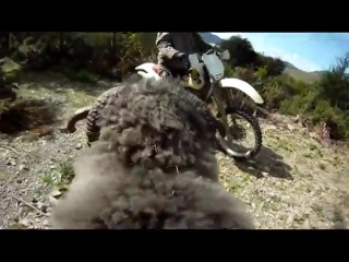 Angry ram strikes again, smashes motorcycle gopro camera, all caught on RAMCAM