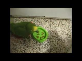 Попугай и кот кто на кухне босс