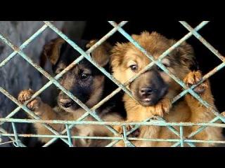Спасите приют - помогите бездомным животным!