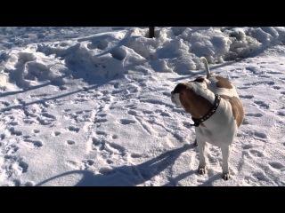 Тест камеры Sony Acro S - Дневная собака