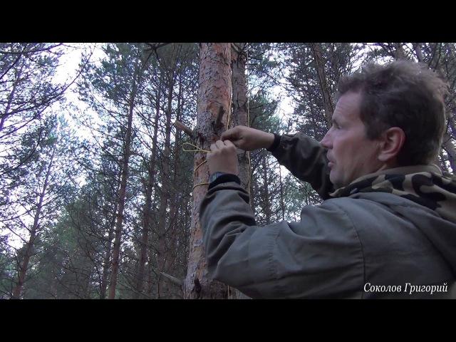 Как повесить в лесу тент чтобы не навредить деревьям