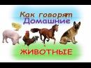 Развивающий мультик для детей Как говорят домашние животныекто как делаетКак говорят животные