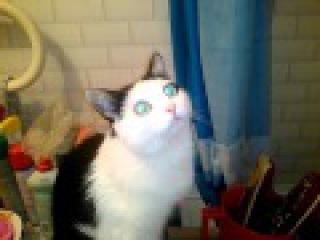 Коты Сантехники ( Супер Братья Марио)