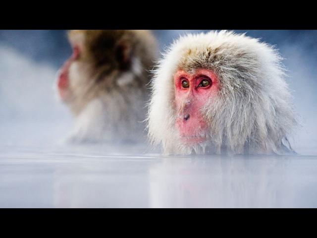 Дикая природа Японии National Geographic