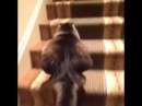 Funny cat climbing the stairs to the beat