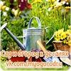 MyOgorod - сад и огород в деталях