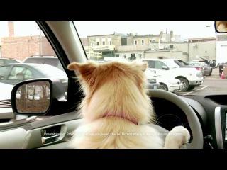 Subaru Dogs - Stolen Parking