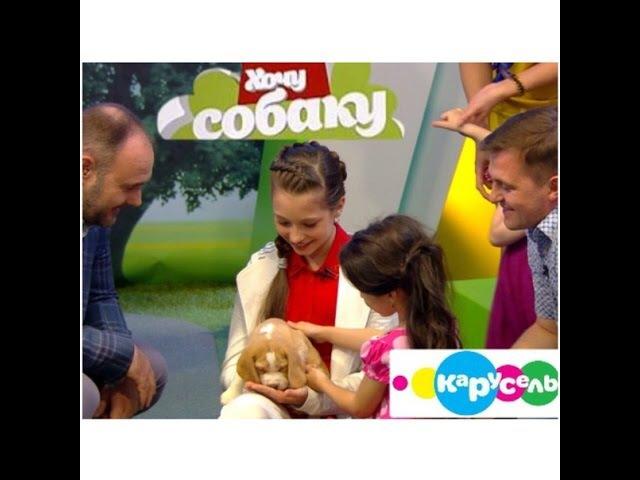 Хочу собаку на канале Карусель Бигль Эфир от 15 08 2015