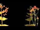 DAMH Hansi Official Video