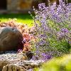 Садовый дизайн. Дача на Ладони