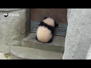 "All possible. Ethan ""Panda"" Hunt."