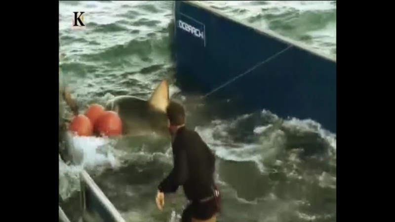 Акульи пастухи. Аллея акул (6-я серия) 2012