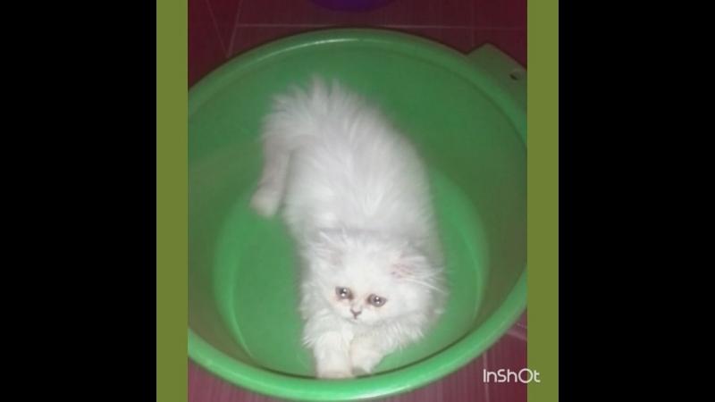 Когда кошка думает что она хомяк в колесе
