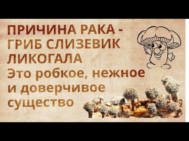 Увы такова горькая правда нас едят грибы