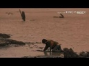 Клип к дораме пропавшая девятка