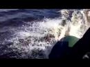 Озеро Аятское лодка МНЕВ Кайман 330 мотор SeaPro OTH 9 9 S 15 л с