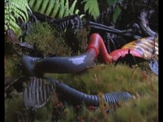 Monster leech swallows giant worm.