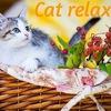 """Зоогостиница """"Cat relax"""" Химки"""