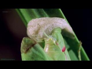 BBC Загадочные животные (3). Удивительные способы размножения (Документальный, природа, 2002)