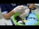 Адлер. Котенок бесплатно. Котята в Дар. Помощь бездомным котятам.