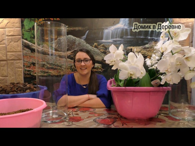 Орхидеи ! Групповая посадка в 19 литровые колбы! Кора ЦеоФлора!